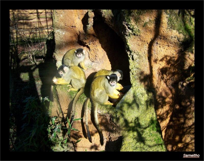 zoo_le13.jpg