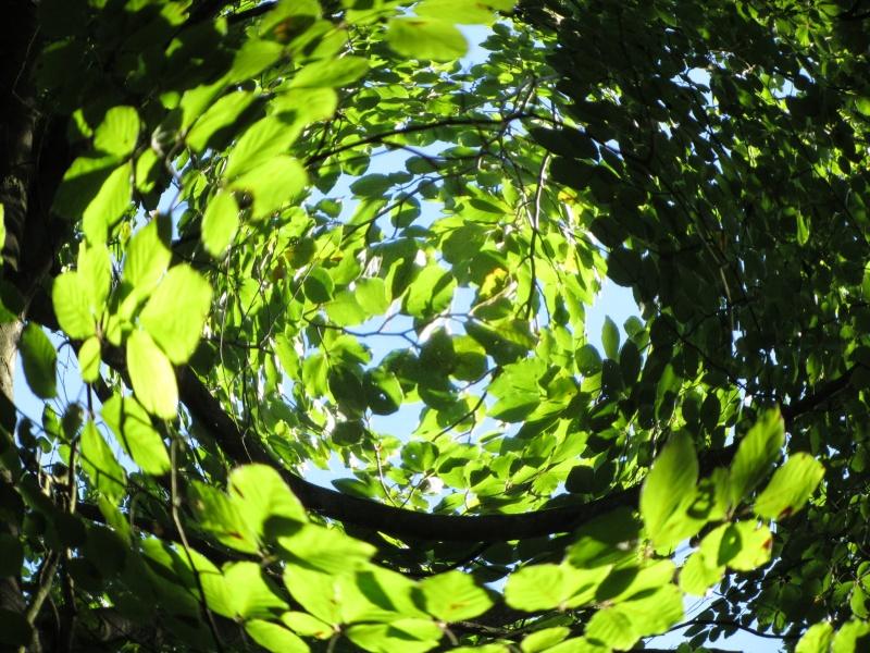 Très Nature insolite suite - Mon carnet à Malices RP86