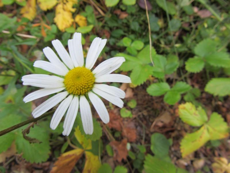 http://i32.servimg.com/u/f32/09/02/08/06/img_0810.jpg