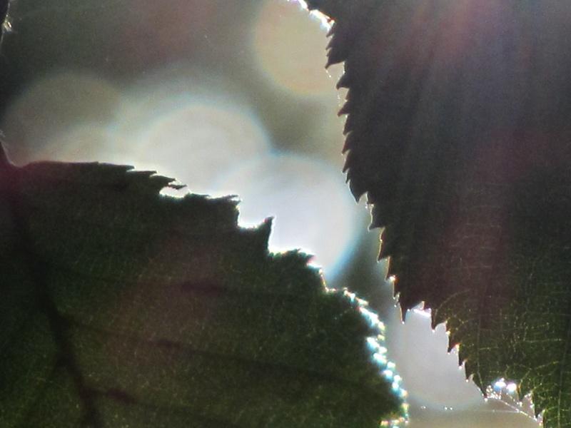 http://i32.servimg.com/u/f32/09/02/08/06/img_1013.jpg