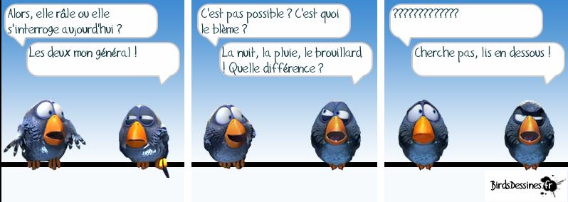 http://i32.servimg.com/u/f32/09/02/08/06/oiseau15.png