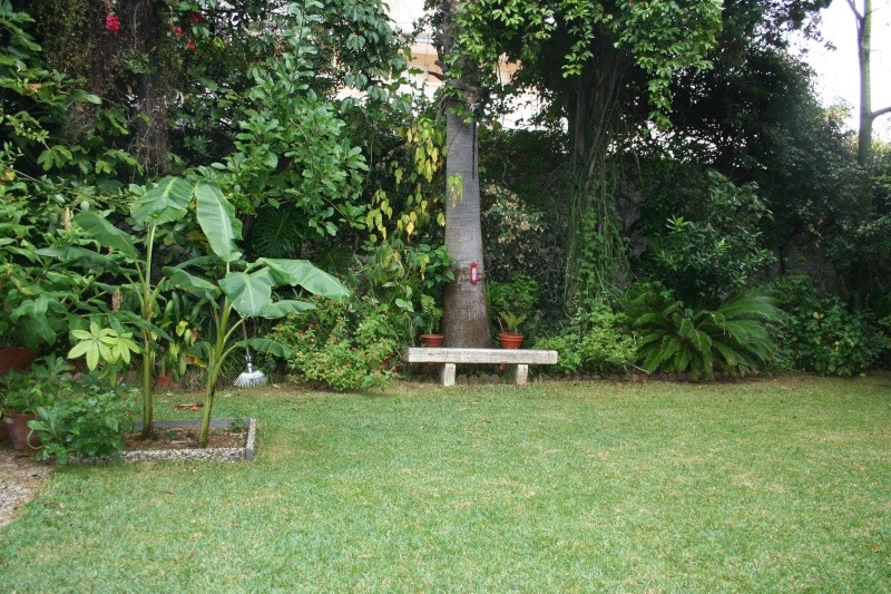 Identifie stenotaphrum secundatum kikuyu au jardin for Recherche tonte pelouse