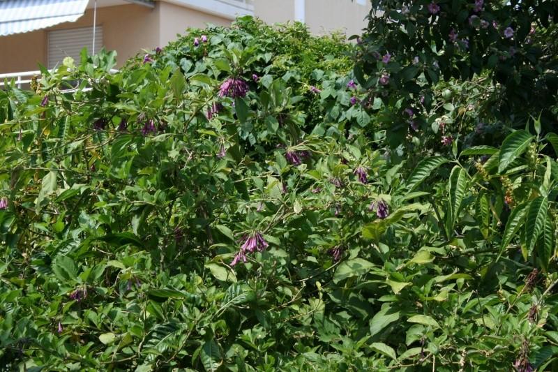 Arbres sympa dans mon jardin en ce moment - Quel arbre dans mon jardin ...