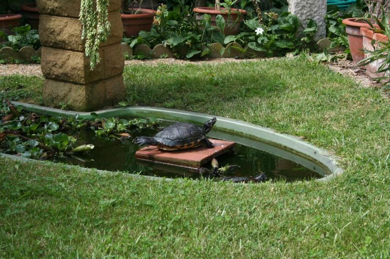 Bassin de jardin pour tortue bassin de jardin for Bassin exterieur pour tortue