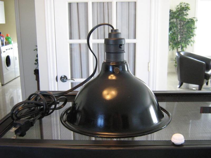 ampoule chauffante terrarium