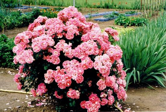 jardin,jardinage,horticulture,art-maniac,bmc,art,