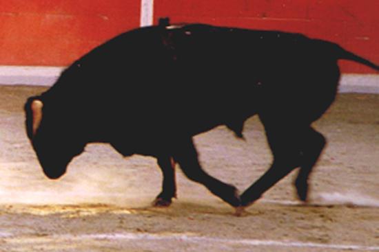 ,tauromachie,corrida,torero,nimes,toro,taureau;tauromachie,pica