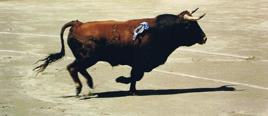 ,tauromachie,corrida,torero,nimes,toro,taureau,picador,