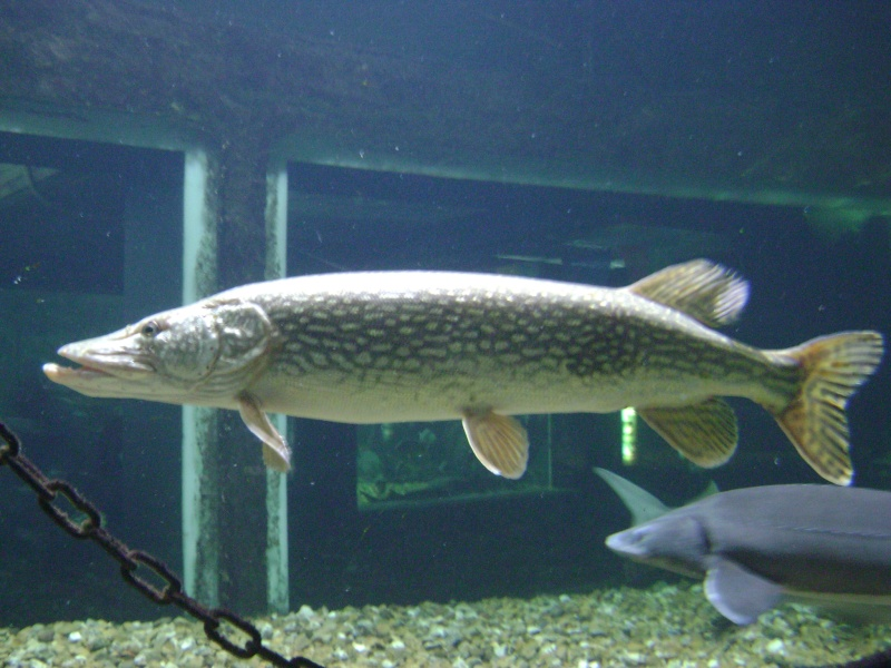aquarium touraine