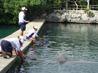 Le parc aquatique de Xel-Há dans chiapas et yucatan xel-ha10