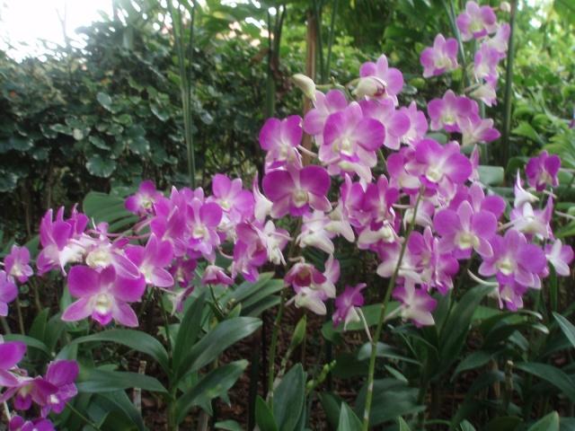 Jardin botanique de Singapour: le Sanctuaire des Orchides ...