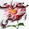 http://i32.servimg.com/u/f32/11/52/12/65/aaeii_13.png
