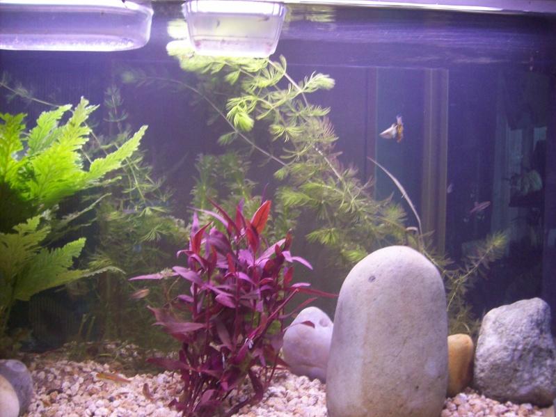 mon aquarium d 39 eau chaude de 100 litres page 2. Black Bedroom Furniture Sets. Home Design Ideas