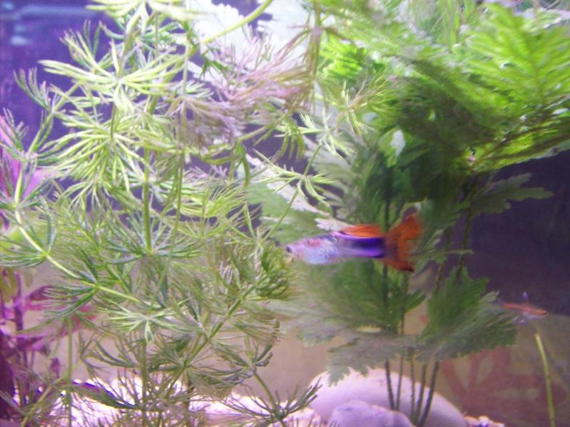 Mon aquarium d 39 eau chaude de 100 litres page 2 for Aquarium eau chaude