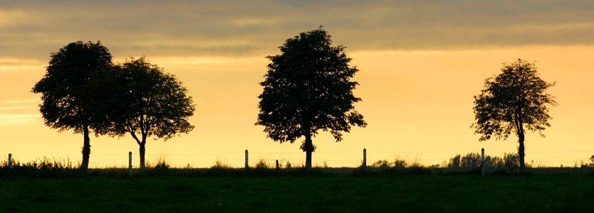 Forum nature