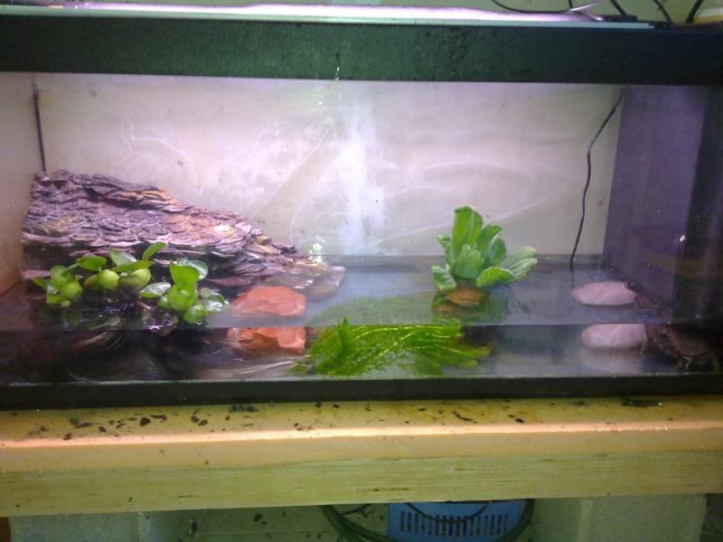 Voici mon aquarium pour mes rhinoclemmys funer a for Aquarium tortue aquatique