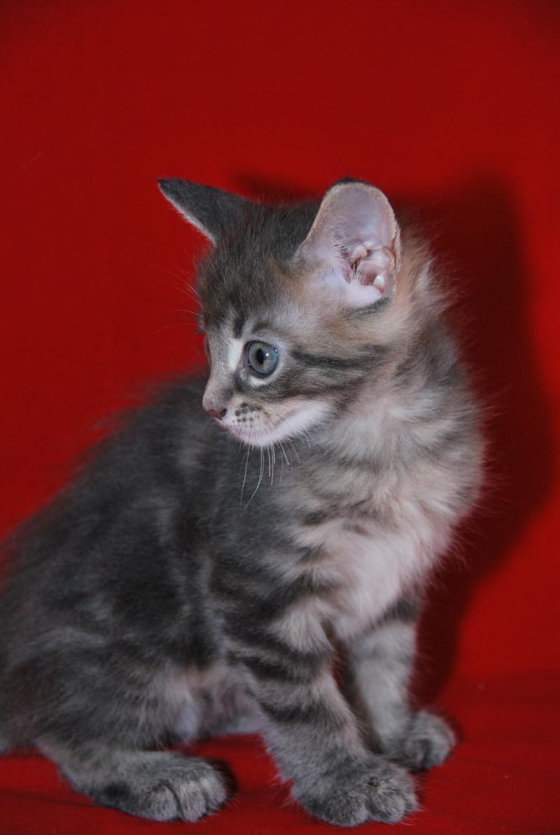 chaton33