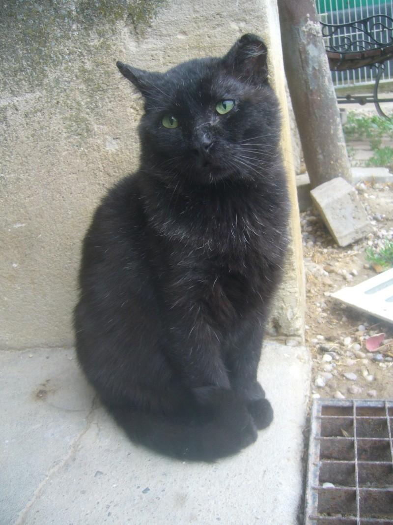 noreil chat noir de 6 ans nancy 54. Black Bedroom Furniture Sets. Home Design Ideas