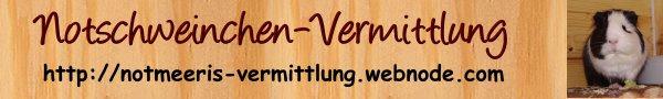 Notschweinchen-Vermittlung - Pflegestelle Sonsbeck