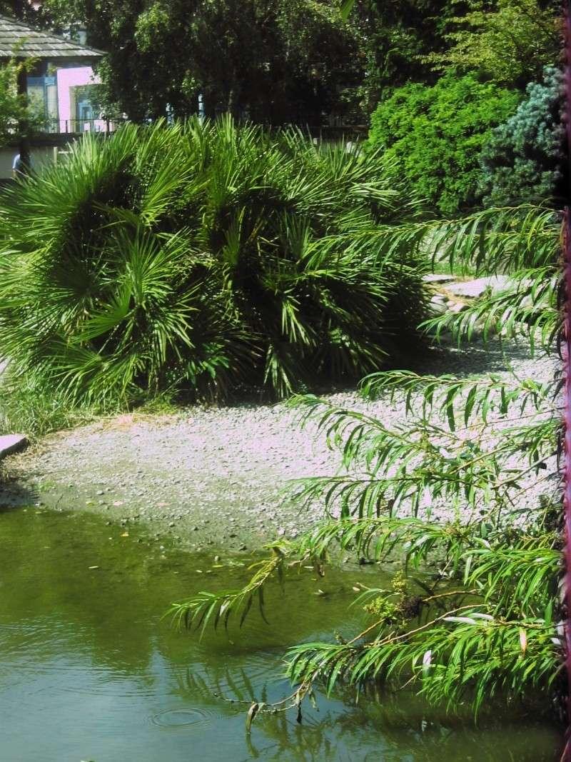 Toulouse 31 jardin japonais du parc compans caffarelli for Le jardin japonais toulouse