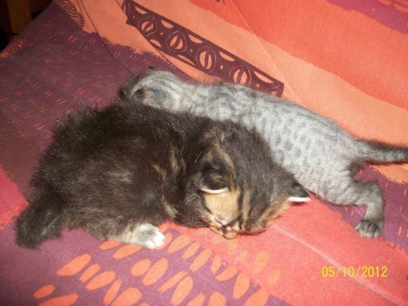 Perte totale de poil chez un chaton - Perte de poils chez le chat ...