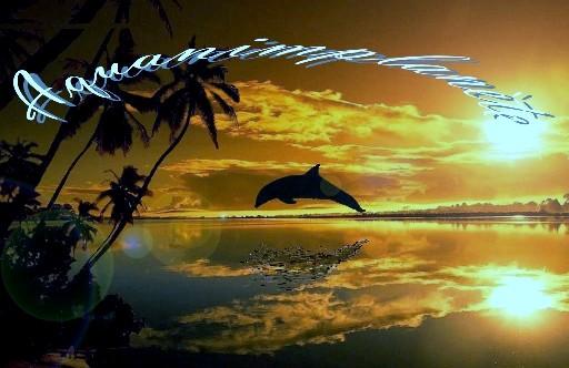 animaux et planete - preservons les