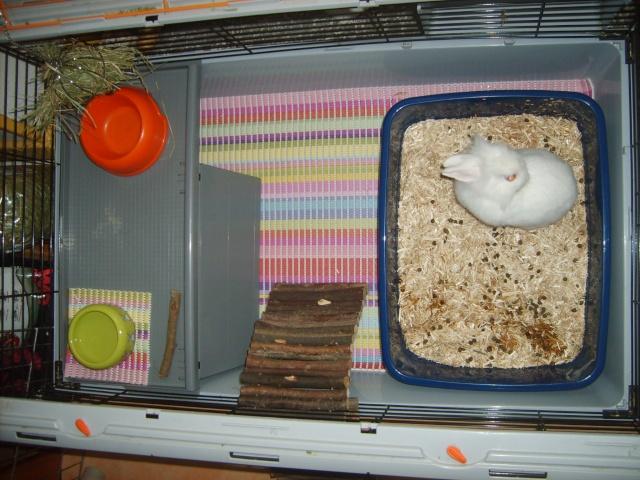 habitation des lapins exemples de cages enclos. Black Bedroom Furniture Sets. Home Design Ideas