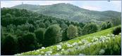 http://i32.servimg.com/u/f32/15/12/50/13/selva_10.jpg