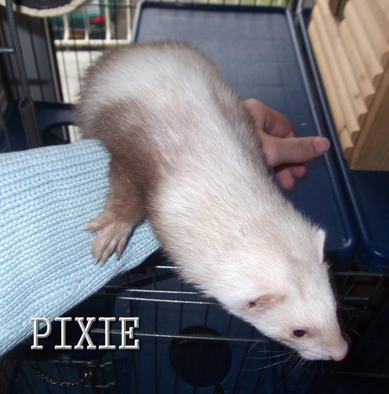 pixie_12.jpg