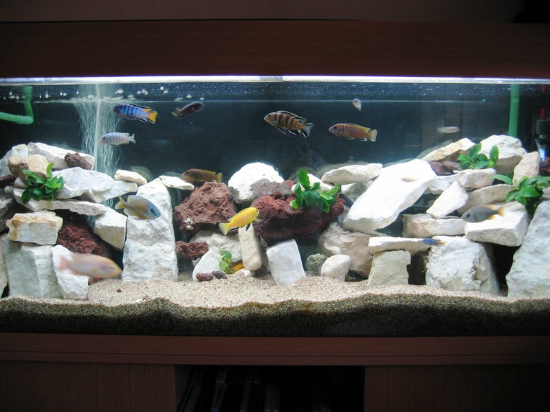 décoration aquarium pour cichlides