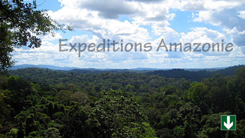 Sous la canopée Guyanaise