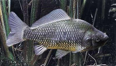 Les prix la pêche dans le domaine de Kourgan