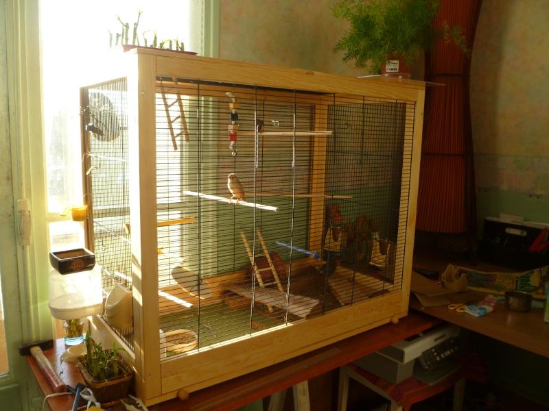 nombre de cailles pour grande cage. Black Bedroom Furniture Sets. Home Design Ideas