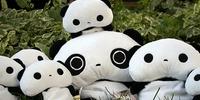Sveikas atvykęs pas Panda.