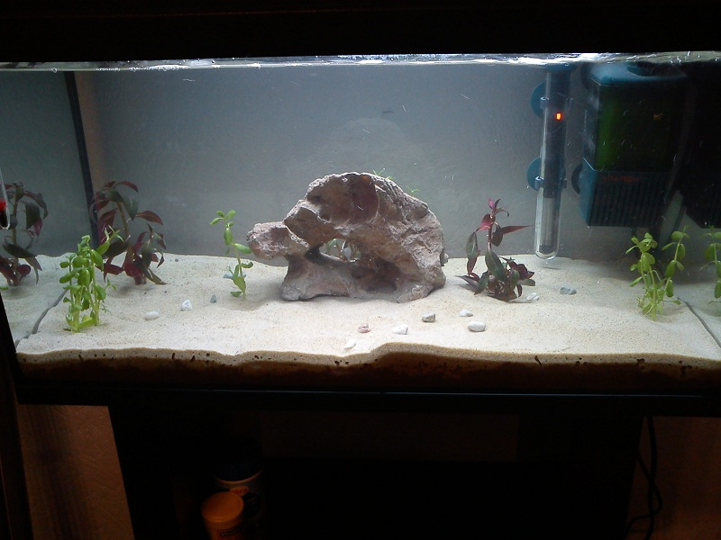 sable a aquarium sable a aquarium votre avis sur ma plantation. Black Bedroom Furniture Sets. Home Design Ideas