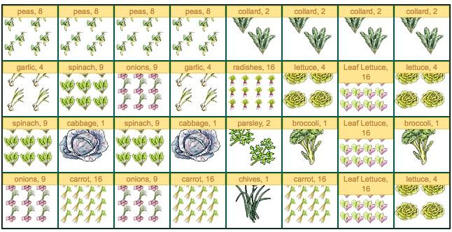 Companion Gardening Layout images