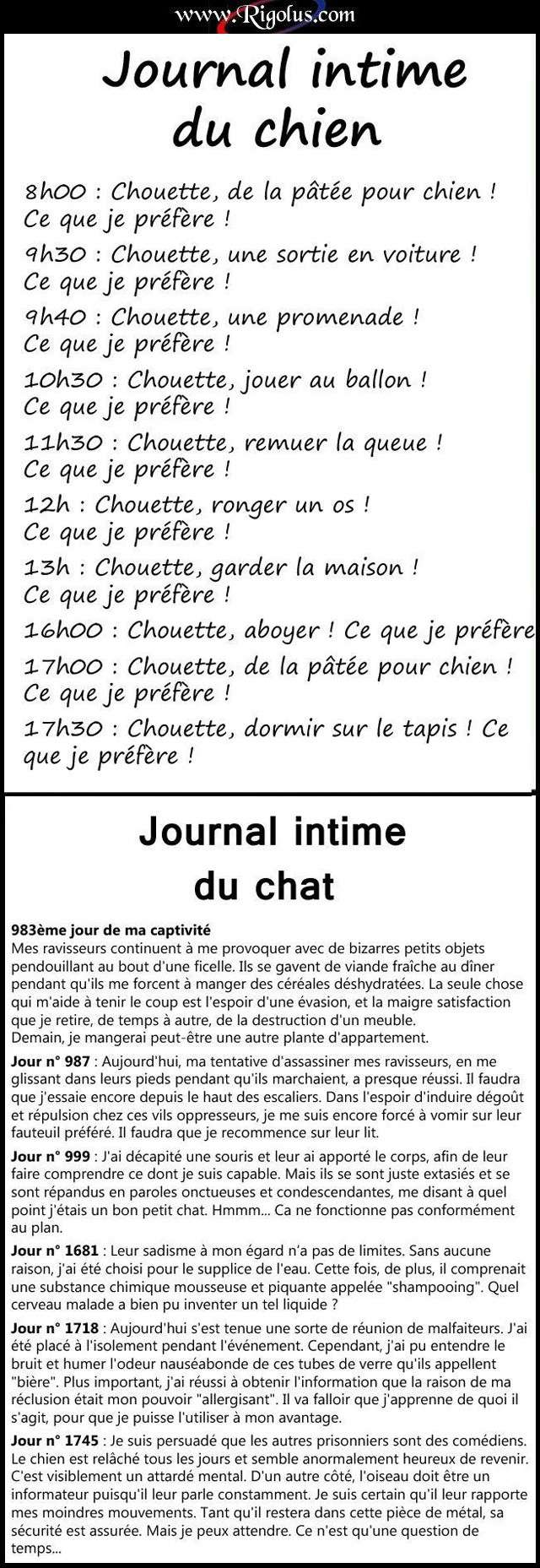 Journal intime du chien et du chat for Salon du chien et chat