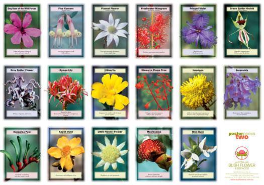 les fleurs liste