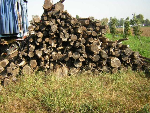 Prezzi legna da ardere pagina 6 for Legna da ardere prezzi