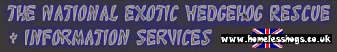 Exotic hedgehog rescue - Homeless Hogs.