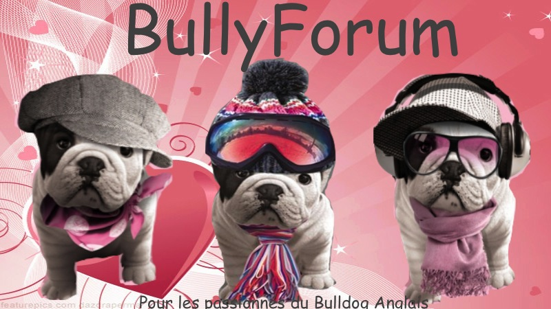 BULLYFORUM PASSION BULLDOG