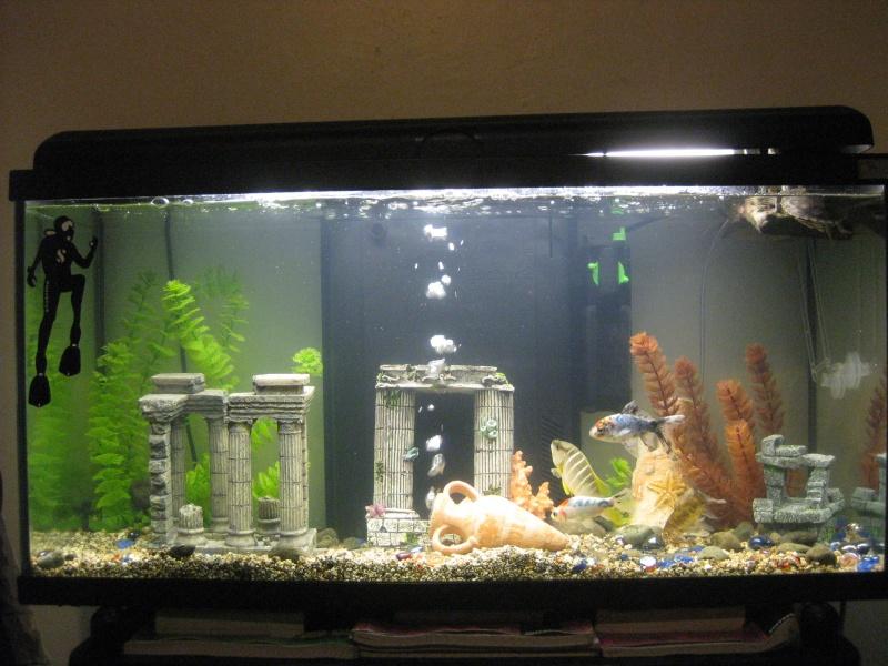 Ecrevisse aquarium eau douce 28 images ecrevisse dans for Poisson aquarium 60l