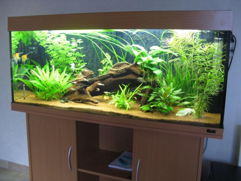 aquarium dans le var aquarium amazonien 272l brut rio 240. Black Bedroom Furniture Sets. Home Design Ideas