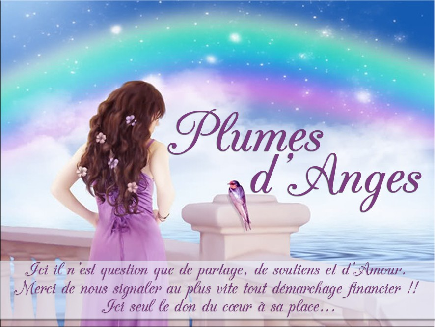 ♥ Plumes d'Anges ♥