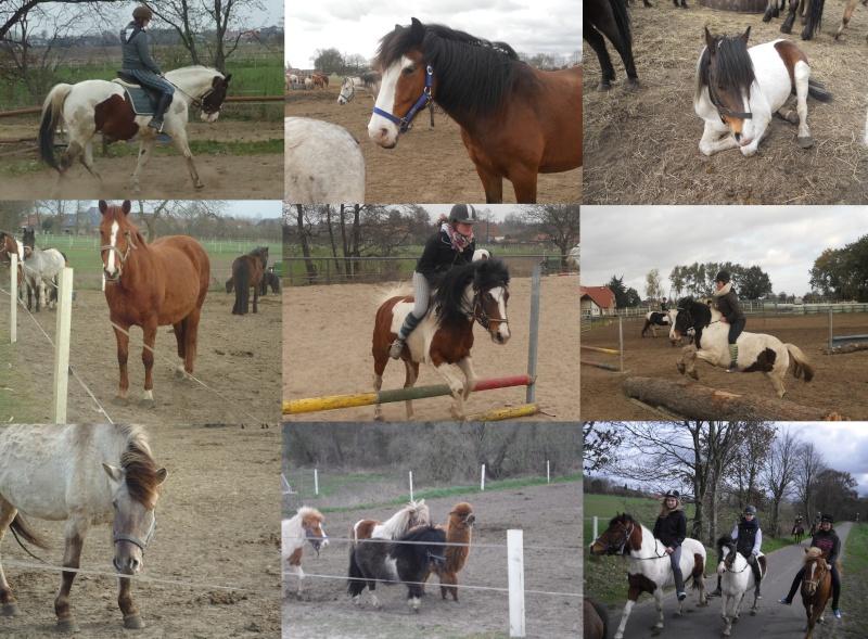 Ponyhof Gerdes