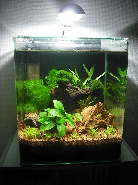 nano 30 litres pour crevettes. Black Bedroom Furniture Sets. Home Design Ideas