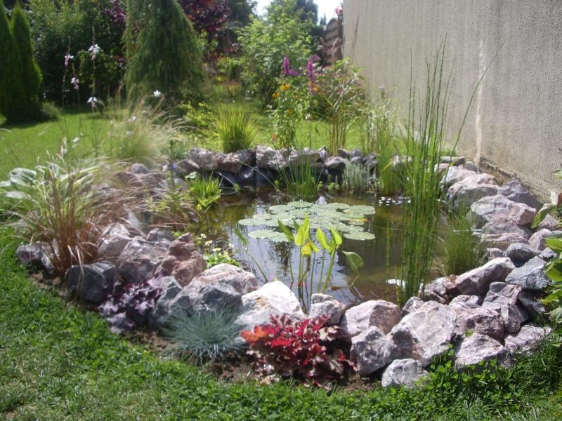 Mon petit jardin aquatique - Petit jardin public nice ...
